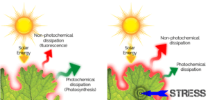 photochemical dissipation